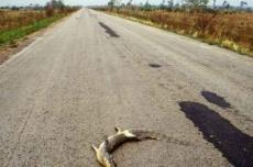 New York Times aponta a BR-262 como uma das rodovias mais mortais para vida selvagem