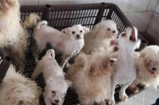 Câmara aprova aumento de pena para maus-tratos contra animais