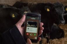 'Tinder' para vacas permite a produtor buscar o gado que deseja