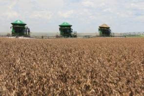 Aumento de área faz safra recorde de soja ser ainda maior em MS: 11,3 milhões de toneladas