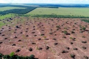 Mulher de 66 anos é autuada em R$11,7 mil por derrubada de árvores