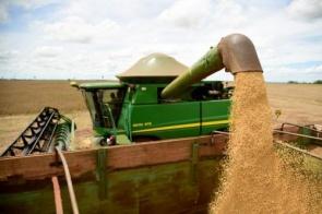 MS elevou produtividade da soja em quase 20% desde 2013 e a produção em 85%