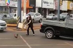 """Galo capturado em vídeo que viralizou estava """"perdido"""" há quase uma semana; assista"""