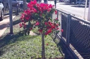 Árvore é plantada no HV em homenagem ao médico vítima de Covid-19