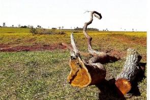 Arrendatário é multado em R$ 10 mil por derrubar mais de 100 árvores