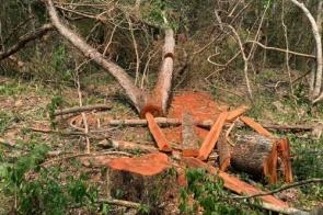Gerente de fazenda é autuado por exploração ilegal de madeira em MS