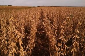 La Niña voltando! Quais as consequências para a safra de soja em Mato Grosso do Sul?