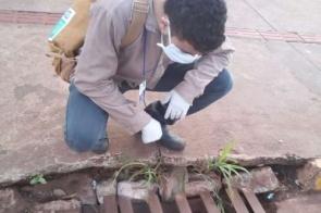 Notificações por dengue em Mato Grosso do Sul passam de 70 mil no ano