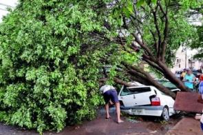 Temporal derruba 40 árvores e deixa centro e bairros sem energia