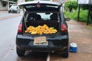Em época de Pequi, moradores da região fazem do fruto uma forma de renda extra