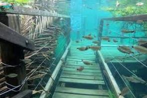 Atrativo em Jardim compartilha imagens de deck submerso