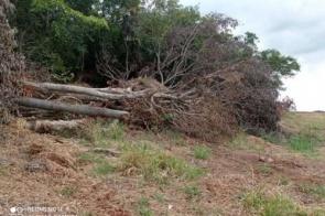 Derrubada ilegal rende multa de R$ 36 mil a fazendeiro