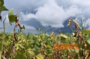 Ministério aprova zoneamento agrícola de risco climático para soja em MS