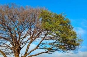 Final de semana que antecede chegada do inverno terá de tempo firme e temperaturas amenas
