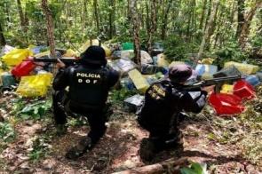 Polícias de MS apreenderam quase 530 toneladas de drogas de janeiro a agosto