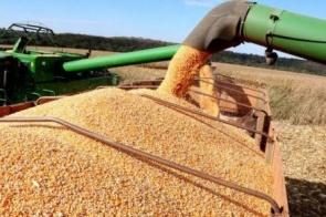 MS espera colher 12,773 milhões de toneladas de soja