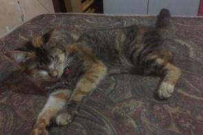 30 gatos são encontrados desamparados em uma casa em Dourados e Associação pede ajuda