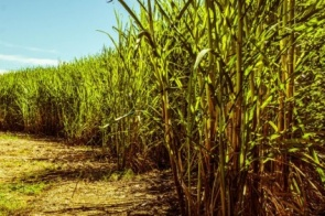 Tempo seco favorece as atividades nas áreas produtoras de soja do Centro-Sul