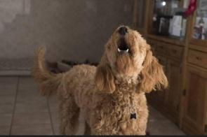Homem mata cachorro do vizinho, o cozinha e chama dono pra jantar