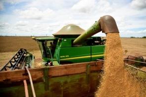 Itaporã é o município com maior produtividade de soja em MS