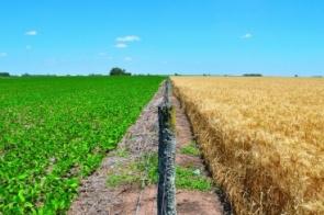 Brasil deve registrar recorde na produção e exportação de soja em 2018