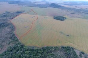 Polícia multa pecuarista em R$ 46 mil por desmatar área nativa
