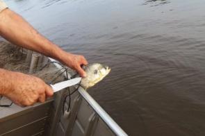 Polícia apreende 1 km de redes de pesca e liberta 20 kg de peixes