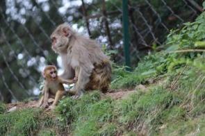 Teste de vacina contra HIV funciona em macacos, diz novo estudo