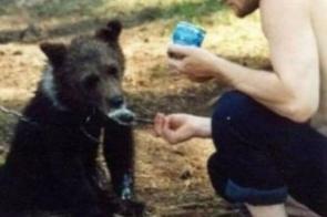 Urso mata e come caçador que o adotou filhote e tratou como pet