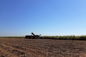 Produção de cana atinge 46,4 milhões de toneladas em MS