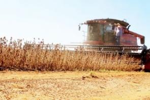 Plantio da Safra 2018/19 de milho deve atingir 9 milhões de toneladas em MS
