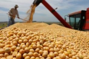 Mercado da soja parado no Brasil