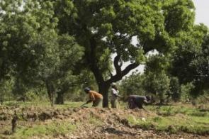 ONU declara Década sobre Restauração de Ecossistemas