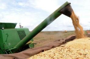 Conab indica que Brasil terá segunda maior safra de grãos da história