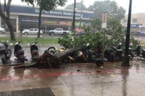 Árvore cai e atinge motos em frente ao shopping em Dourados