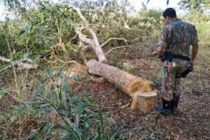 PMA autua assentado em R$ 3 mil por derrubada ilegal de árvores para construção de cercas