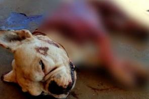 Jovem chega bêbado em casa e mata cachorro com seis facadas