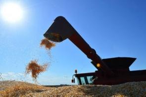 Máquinas avançam por 1,3 milhão de hectares e colheita do milho entra na metade final