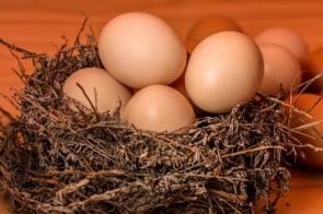 Arábia Saudita anuncia compra de frutas, castanhas e ovos do Brasil