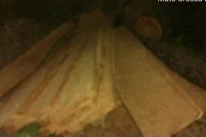 Ação conjunta autua infrator em R$ 2 mil por exploração de madeira