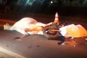Motociclista de 49 anos morre após colidir em vaca na BR-262