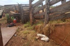 Polícia fecha abatedouros clandestinos e multa homens por crime ambiental
