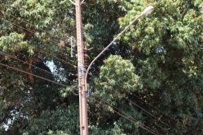 Árvore provoca curto circuito e Rua Paulo Yutaka fica sem iluminação pública temporariamente