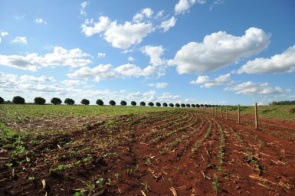 Plantio da soja entra na reta final em MS com 2,7 milhões de hectares cultivados