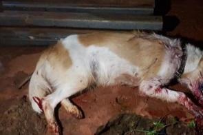 Cadela é morta a pauladas em Campo Grande ao procurar comida em lixo