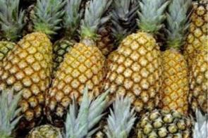 Imperdível: Nesta sexta-feira (17) na Frutaria Pague Pouco você paga R$ 0,99 no Abacaxi Pérola