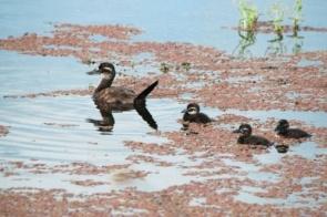 Estudo traz novas descobertas sobre impacto da ação humana nos ambientes de água doce