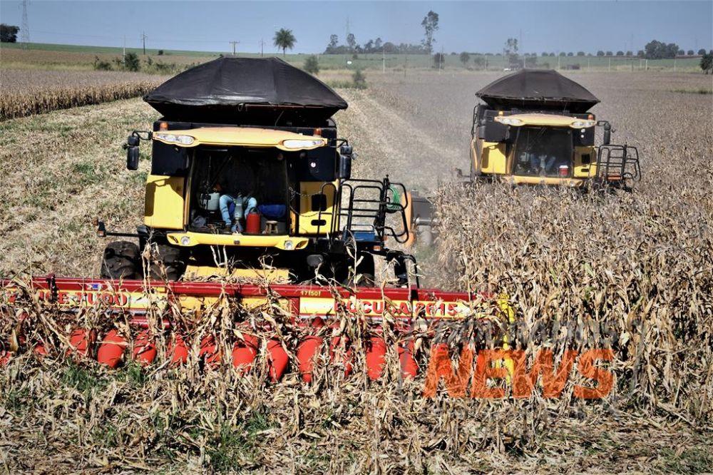 Dourados colheu mais de 12% da área cultivada com o milho segunda safra - Crédito: Hedio Fazan/Dourados News