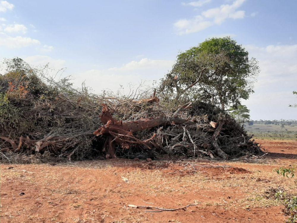 O proprietário rural também responderá por crime ambiental - Crédito: Divulgação