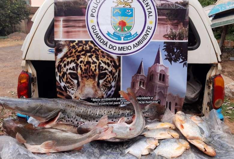 O pescado será doado para instituições filantrópicas, depois de periciado - Crédito: Divulgação